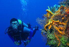 Comment et où débuter en plongée sous-marine ?